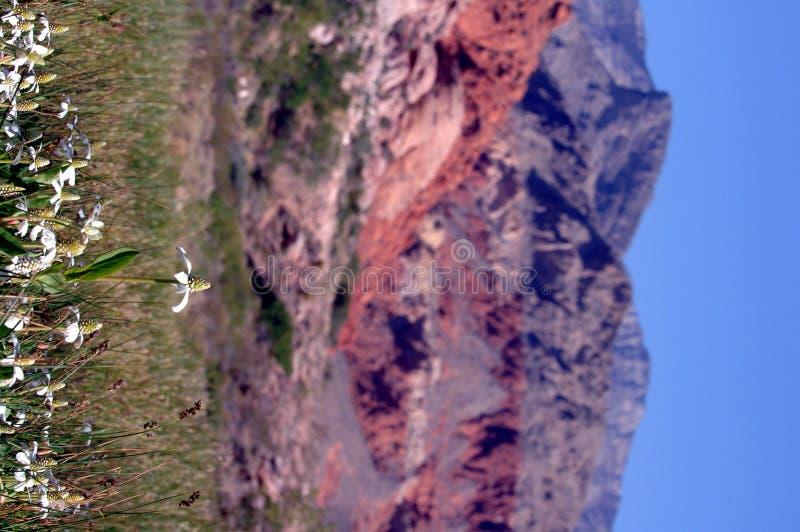 Fiori rossi della sorgente del Nevada della roccia immagine stock