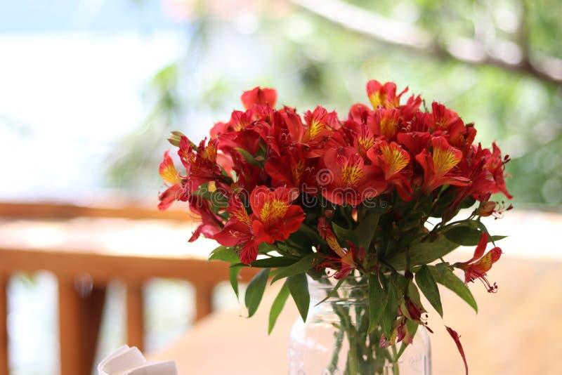 Fiori rossi e gialli in America Centrale fotografie stock