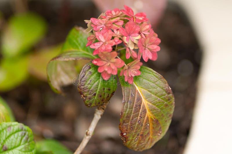 Fiori rossi nella fine del giardino su immagine stock