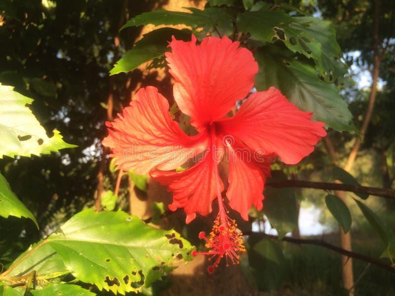 Fiori rossi nella foresta fotografia stock