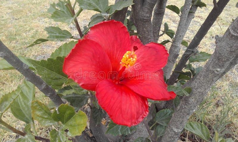 Fiori rossi, piante verdi immagine stock libera da diritti