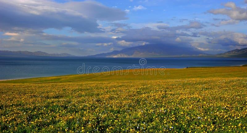 Fiori sboccianti lungo il lago alpino fotografia stock libera da diritti