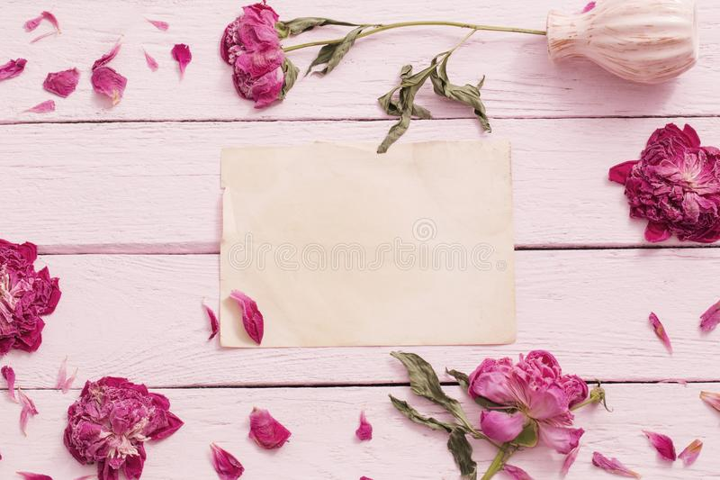 Fiori secchi su fondo di legno rosa fotografia stock libera da diritti
