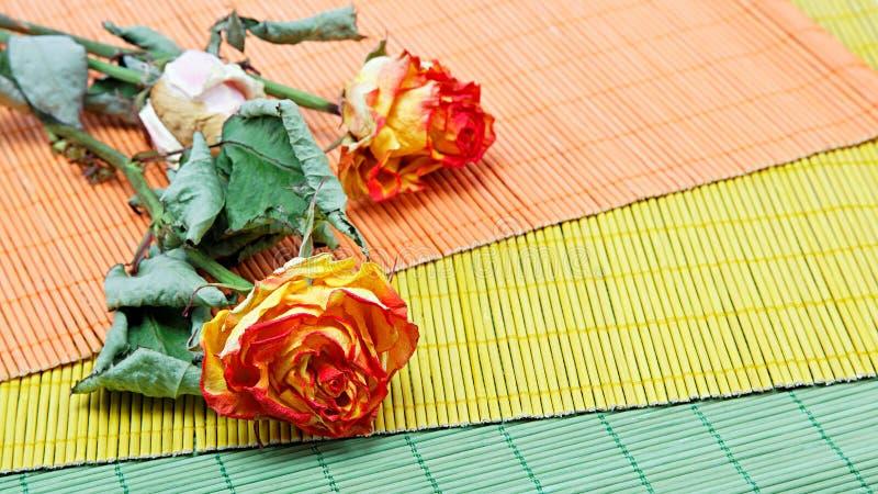 Fiori secchi su un fondo di colore fotografia stock libera da diritti