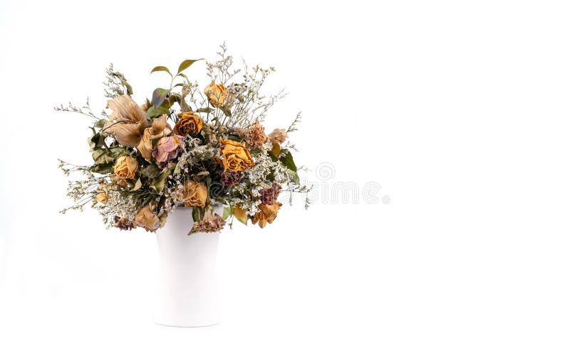 Fiori secchi in vaso bianco immagini stock libere da diritti