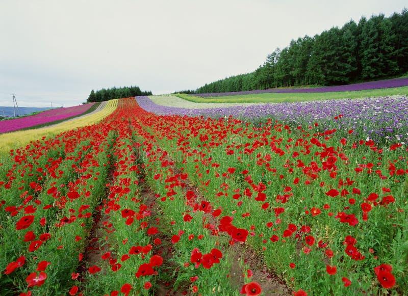 Fiori selvaggi fotografie stock libere da diritti