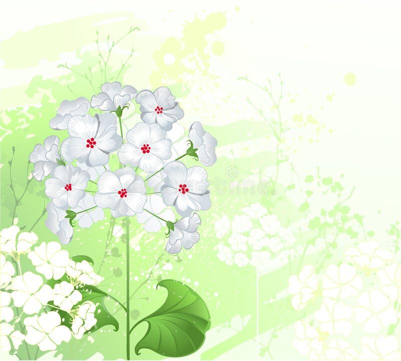 Fiori selvaggi bianchi illustrazione vettoriale