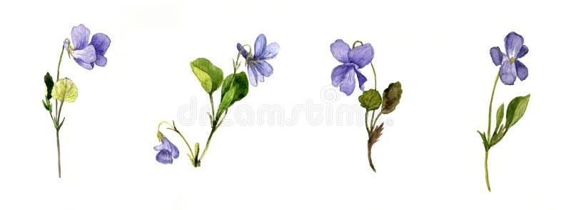 Fiori selvaggi blu dell'acquerello illustrazione vettoriale