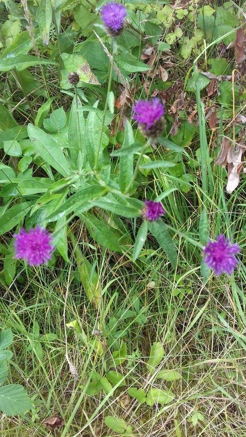 Fiori selvaggi in campagna immagine stock