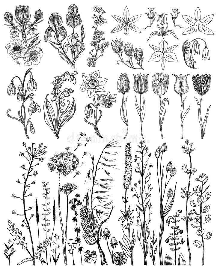 Fiori selvaggi con le foglie Metta della pianta botanica di nozze con la foglia ed i germogli Erba organica botanica della molla  illustrazione di stock
