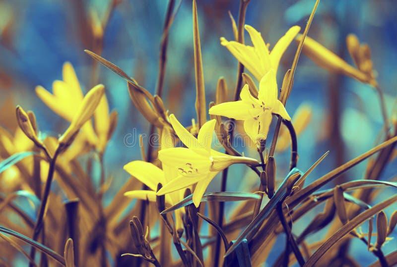 Fiori selvaggi d'annata del giglio fotografia stock