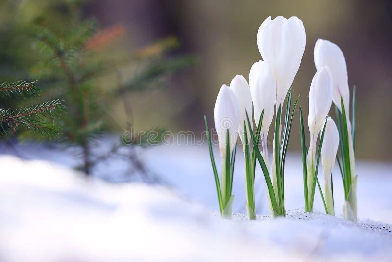 Fiori selvaggi della primavera fotografie stock libere da diritti