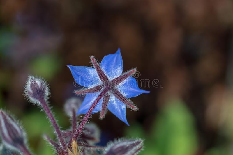 Fiori selvaggi di fioritura variopinti della molla in vista immagine stock