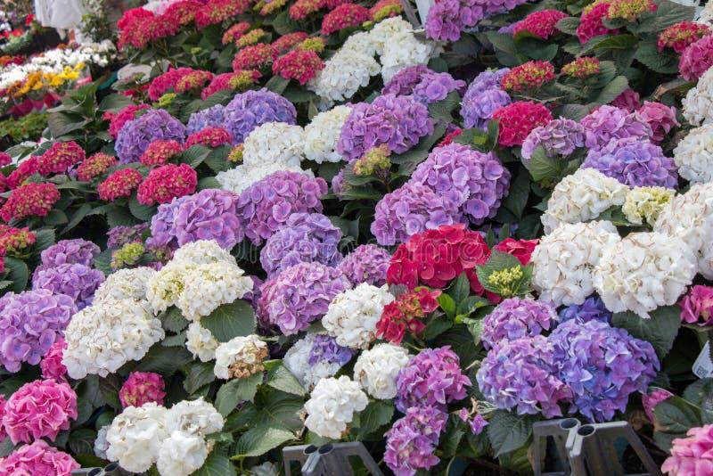 Fiori selvaggi di fioritura variopinti della molla in vista immagini stock libere da diritti