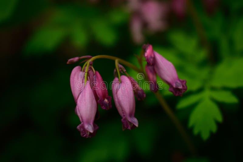 Fiori selvaggi di rosa della foresta immagini stock libere da diritti