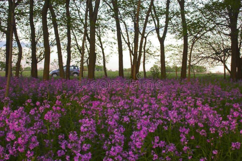 Fiori selvaggi e foresta dentellare fotografia stock