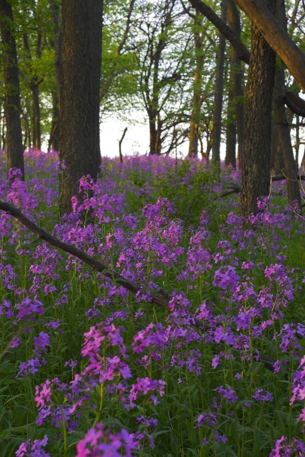 Fiori selvaggi e foresta dentellare immagini stock