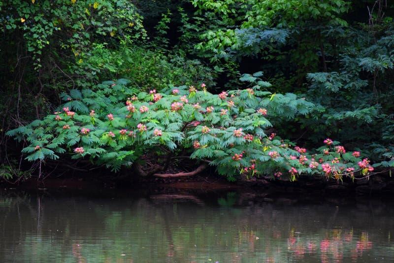 Fiori sopra un fiume fotografia stock