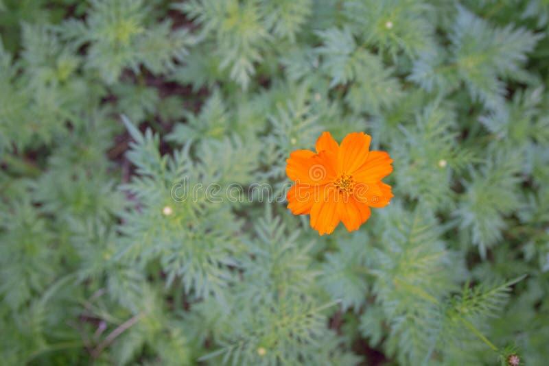 Fiori su priorità bassa verde fotografia stock