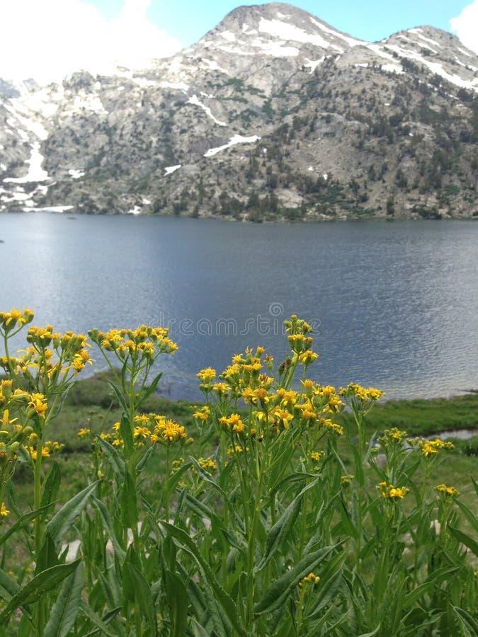 Fiori su un lago immagini stock