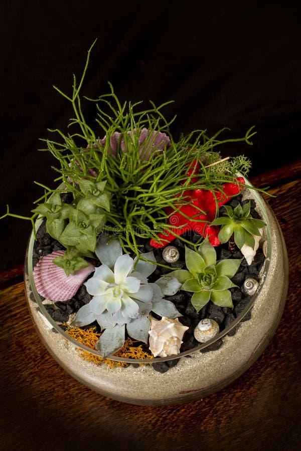 Fiori succulenti in una ciotola di vetro immagine stock