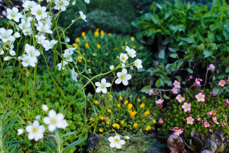 Fiori sui fiori del giardino del bazar, mercato fotografia stock libera da diritti