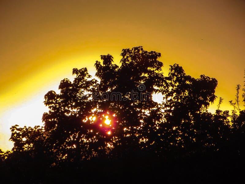 Fiori sui precedenti del tramonto fotografia stock libera da diritti