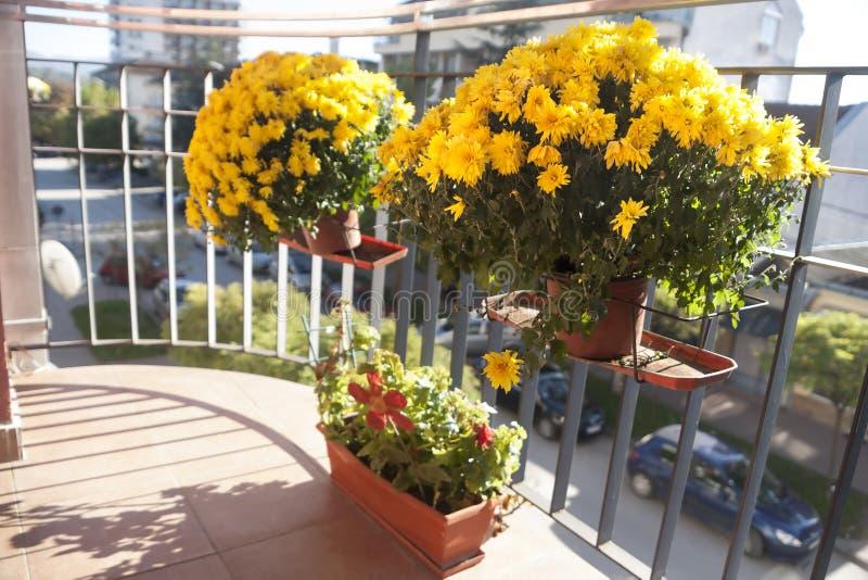Fiori sul terrazzo fotografia stock. Immagine di bellezza - 64019452