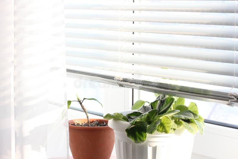 Fiori sulla finestra viole fotografia stock