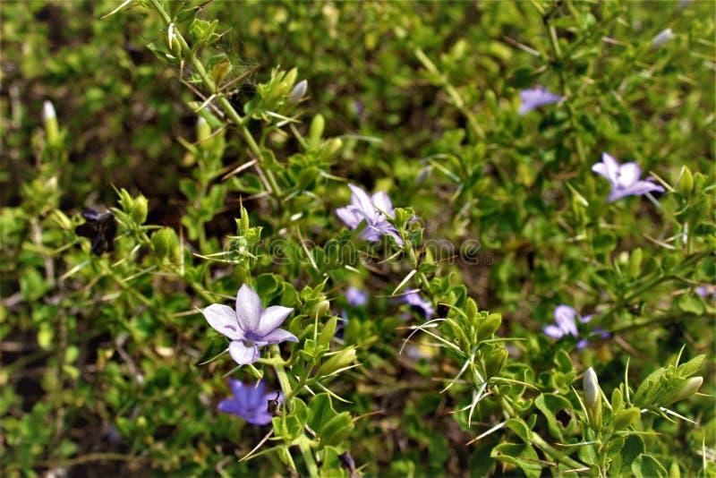 Fiori sulle piante fotografia stock