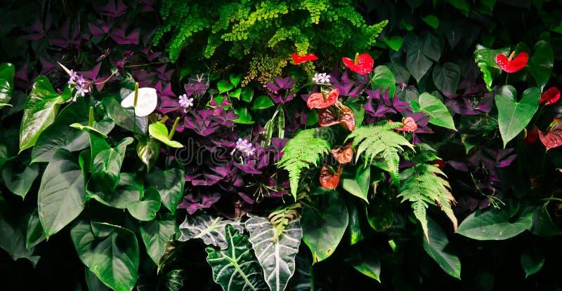 Fiori tropicali immagini stock