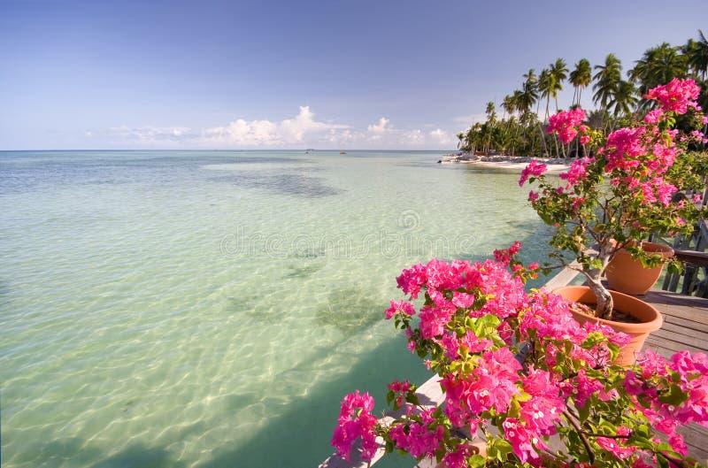 Fiori tropicali fotografia stock