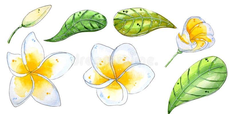 Fiori tropicali dell'acquerello dipinto a mano illustrazione vettoriale