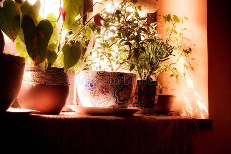 Fiori in una finestra fotografia stock