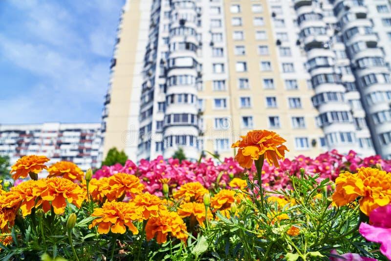 Fiori urbani con l'alta costruzione dell'abitazione fotografia stock