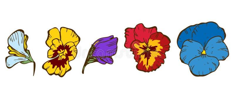 Fiori variopinti di viole del pensiero isolati su fondo bianco Vettore floreale illustrazione di stock
