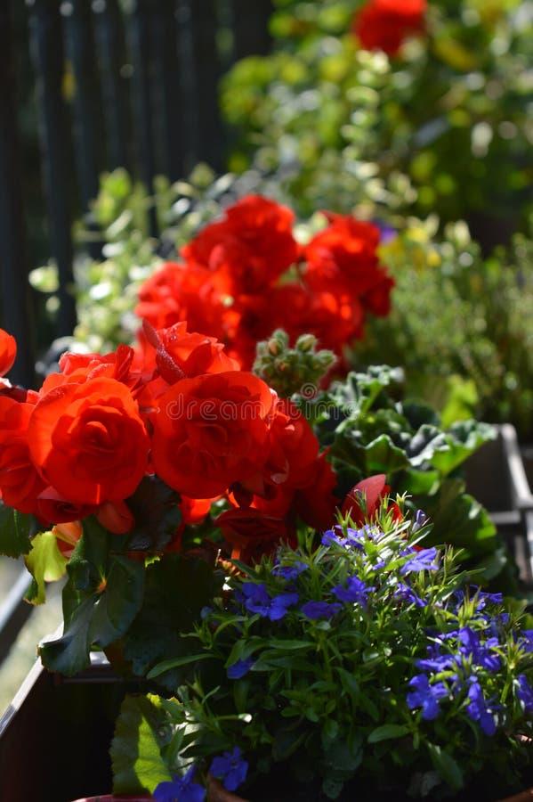 Fiori variopinti in pieno di sole nell'estate fotografia stock libera da diritti