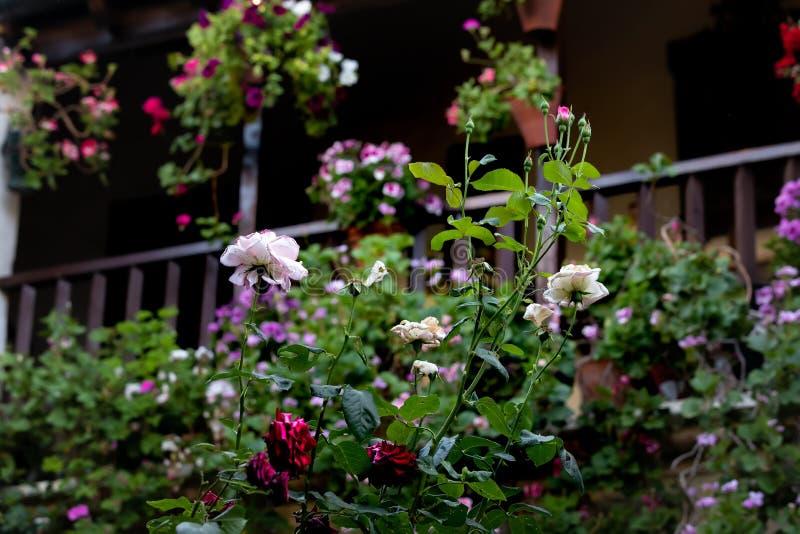 Fiori variopinti in un ambiente fiorito con fondo unfocused fotografie stock libere da diritti