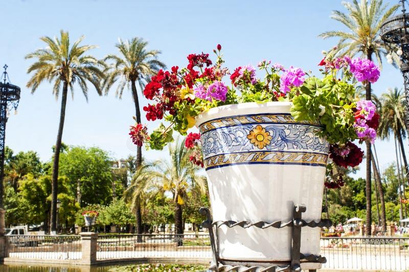 Fiori in vasi da fiori fotografia stock