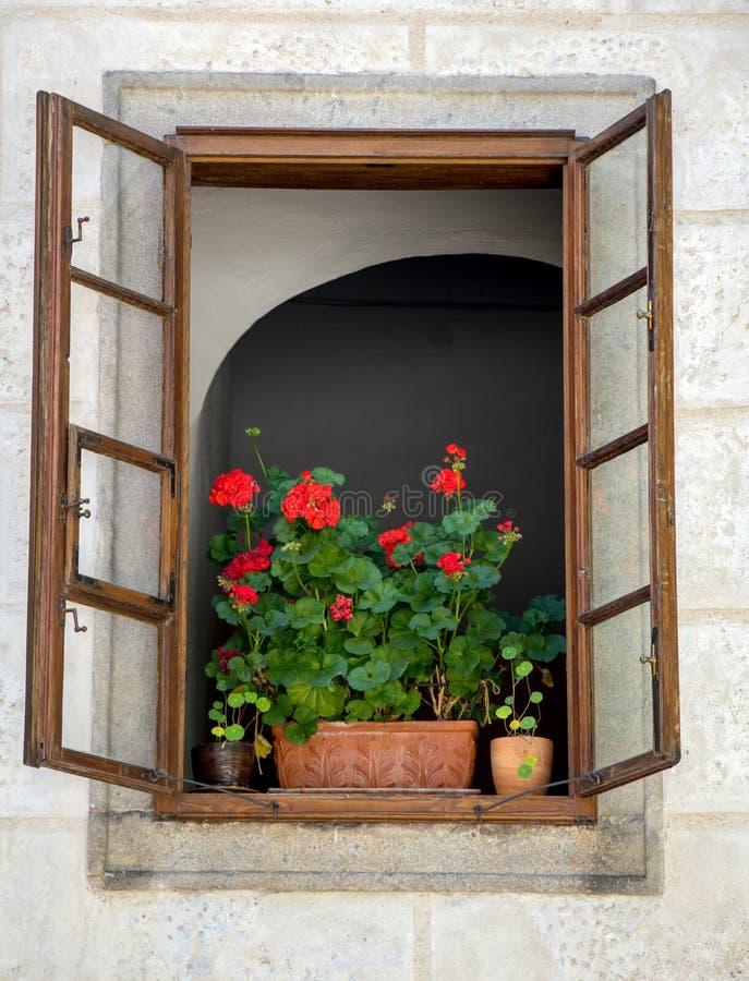 Fiori in vasi nella finestra aperta immagine stock