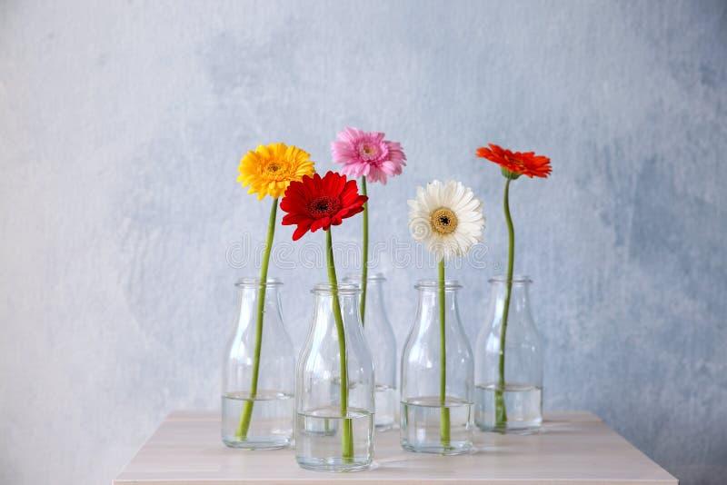 Fiori in vasi sul fondo di colore fotografia stock libera da diritti