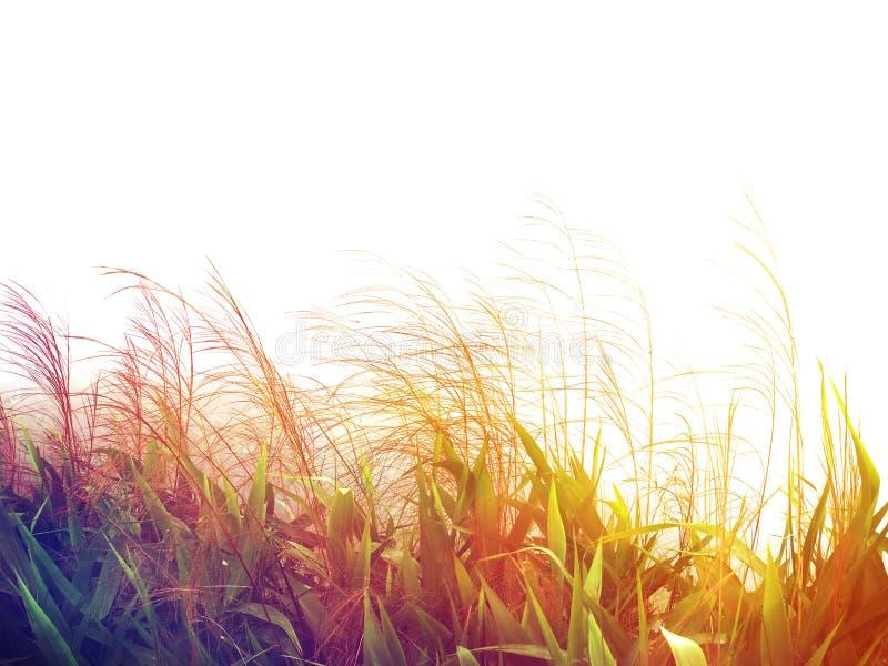 Fiori ventosi dell'erba selvatica nel campo fotografie stock libere da diritti