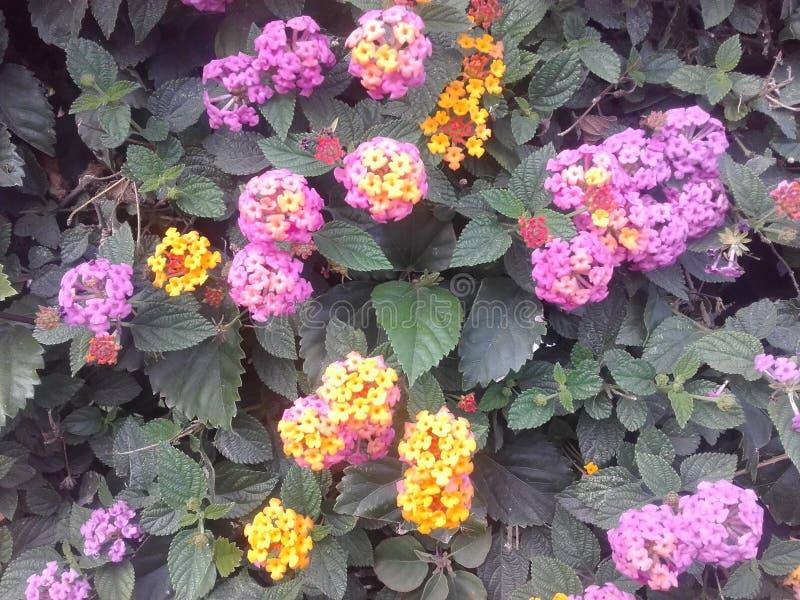Fiori viola Pianta esotica, fiori esotici Fiori variopinti fotografia stock