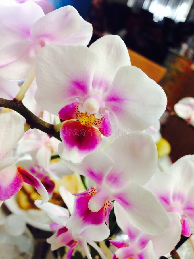 Fiori viola variopinti dell'orchidea immagini stock