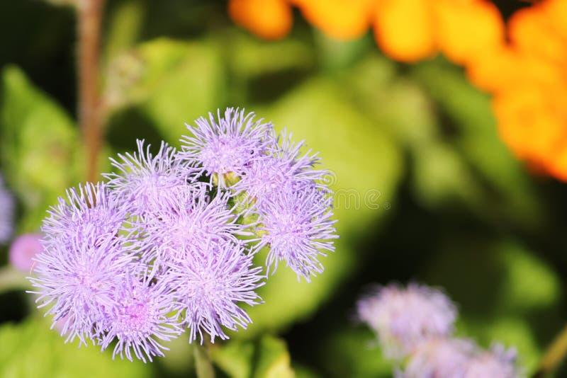 Fiorisca in giardino al giorno soleggiato della primavera o dell'estate immagini stock libere da diritti
