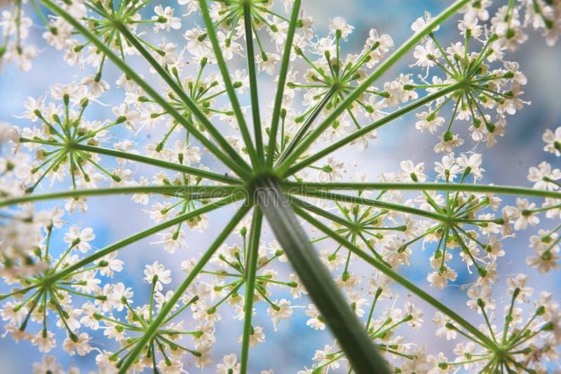 fiorisca il bianco fotografia stock