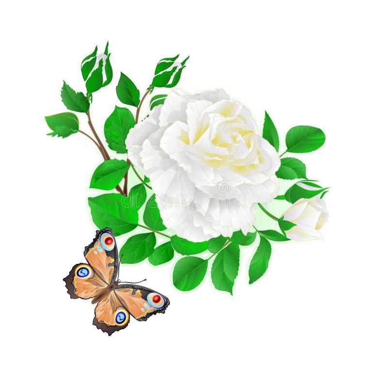 Fiorisca la rosa di bianco e germogli e un'illustrazione festiva d'annata di vettore del fondo della farfalla royalty illustrazione gratis
