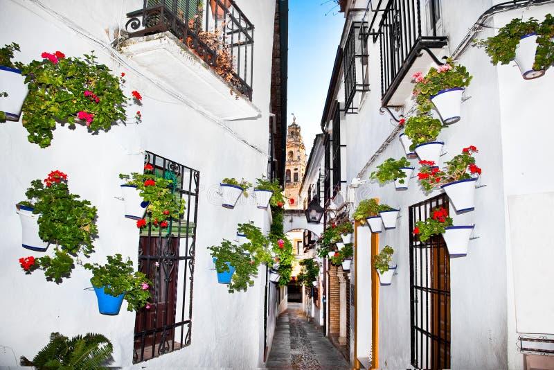 Fiorisce il vaso da fiori sulle pareti sulle vie di Cordova. La Spagna fotografie stock libere da diritti