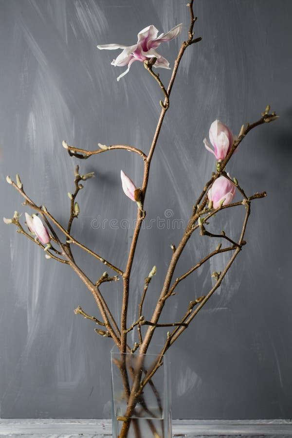Fiorisce la magnolia in vaso di vetro Stellata della magnolia Ancora vita 1 immagine stock libera da diritti