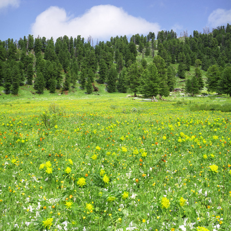 fiorisce le alte montagne fotografia stock